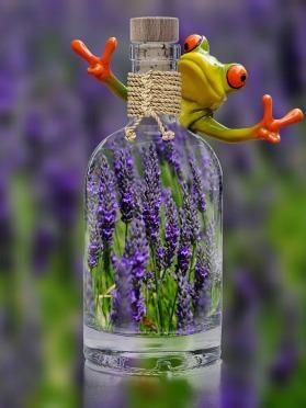 lavender-1490787_1280