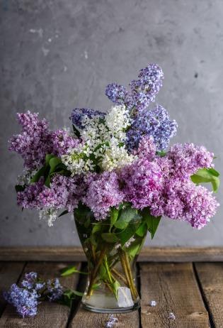 lilac-1914124_1280